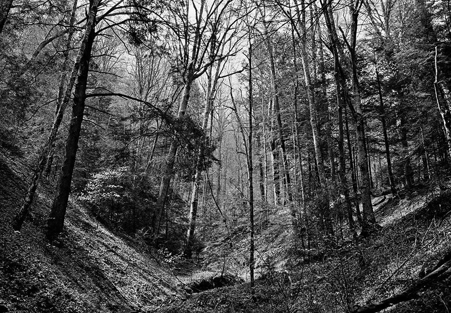 Lilleys Woods, Letcher County by Guy Mendes