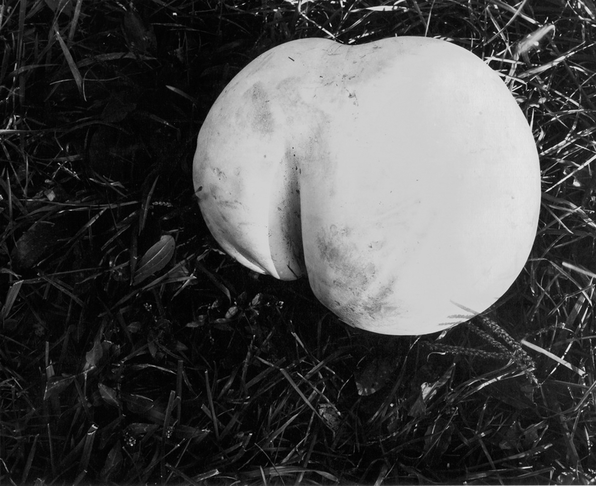 Puffball by Guy Mendes
