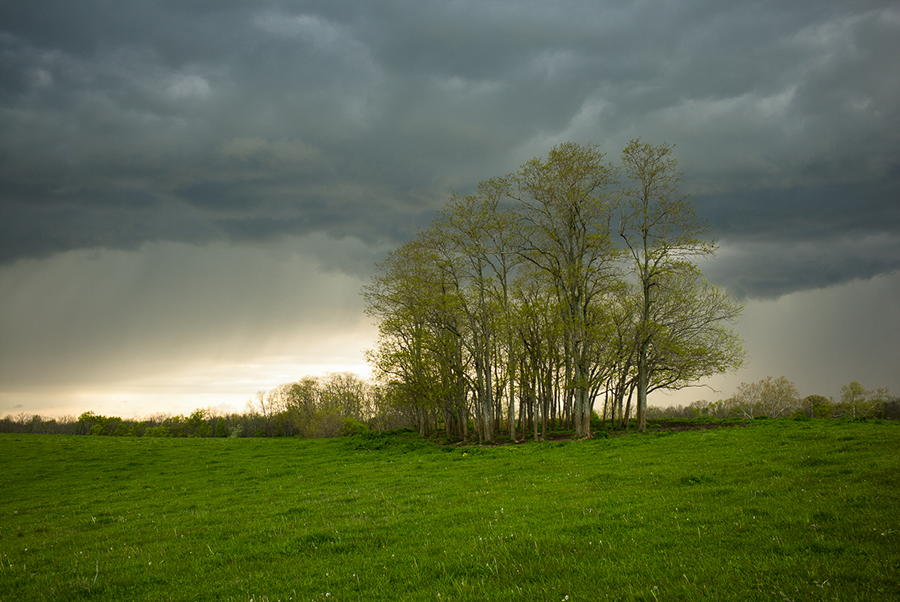 Spring Rain on the Ponderosa, Scott County, KY by Guy Mendes